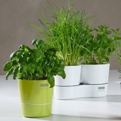 Herb Hydro Pots